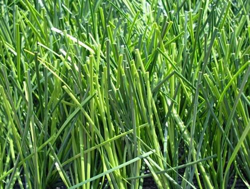 开发区人造草坪